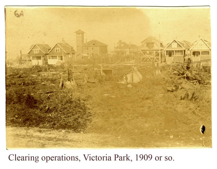 Victoria Park clearing 1901